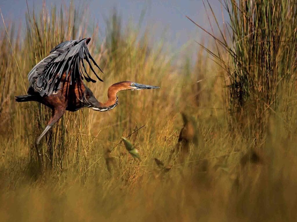 mabamba wetland swamp